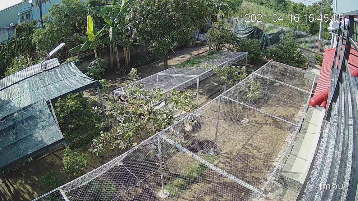Camera quan sát sân vườn